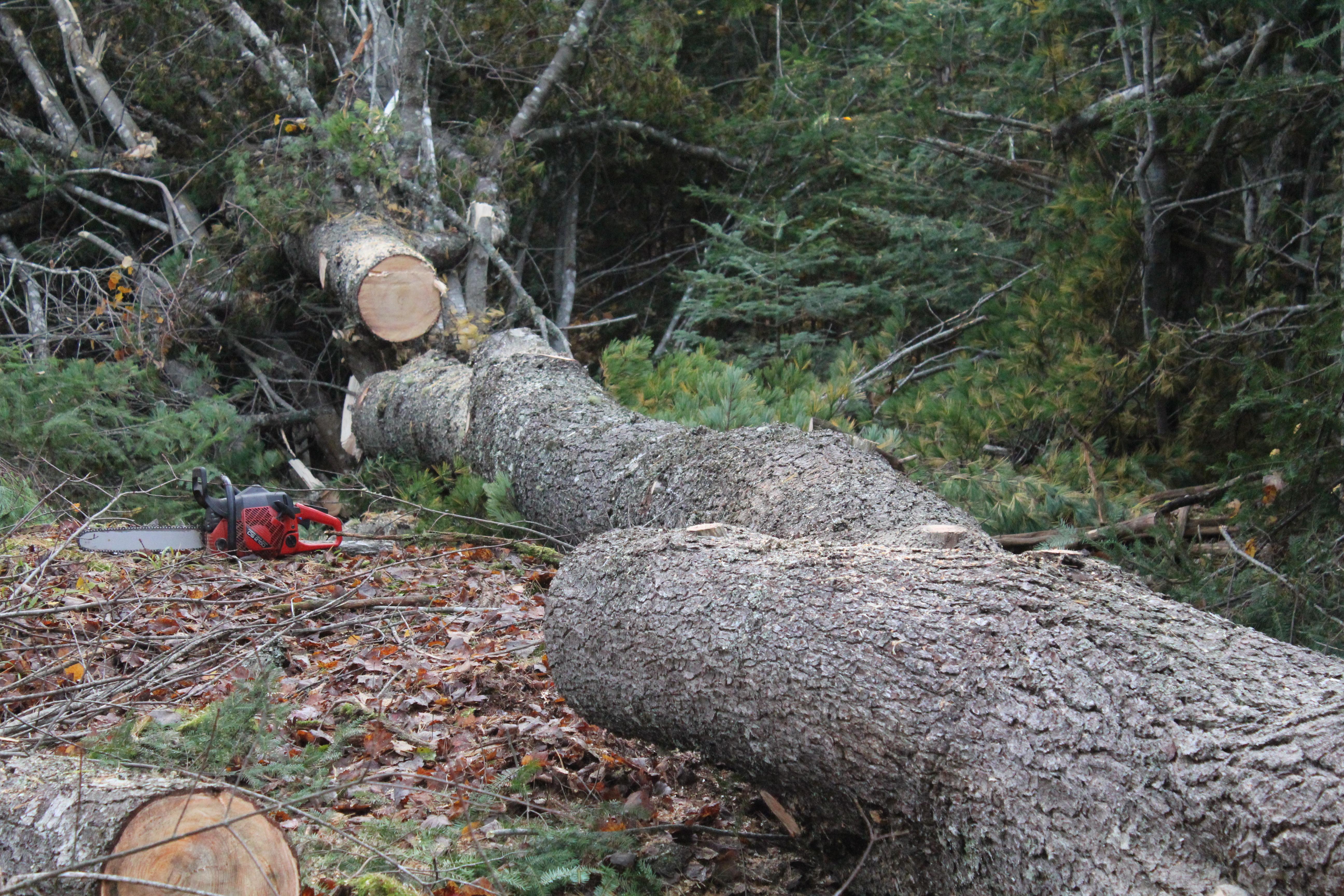 Tree Stump Bench Ideas Part - 16: Restless Roots