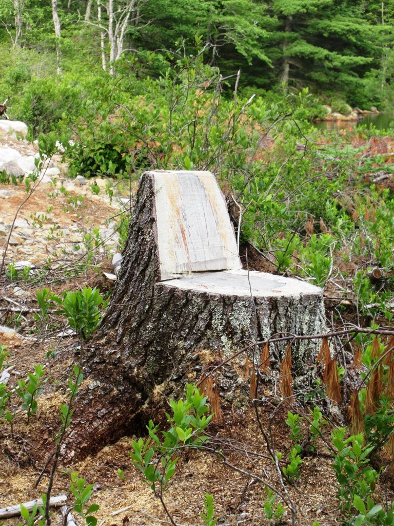 Stump seat