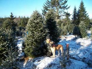 Weihnachtsbaum gefunden