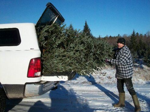 Weihnachtsbaum passend gemacht