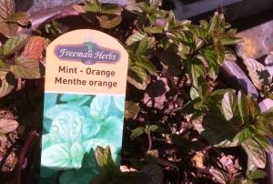 Miint-Orange Herb