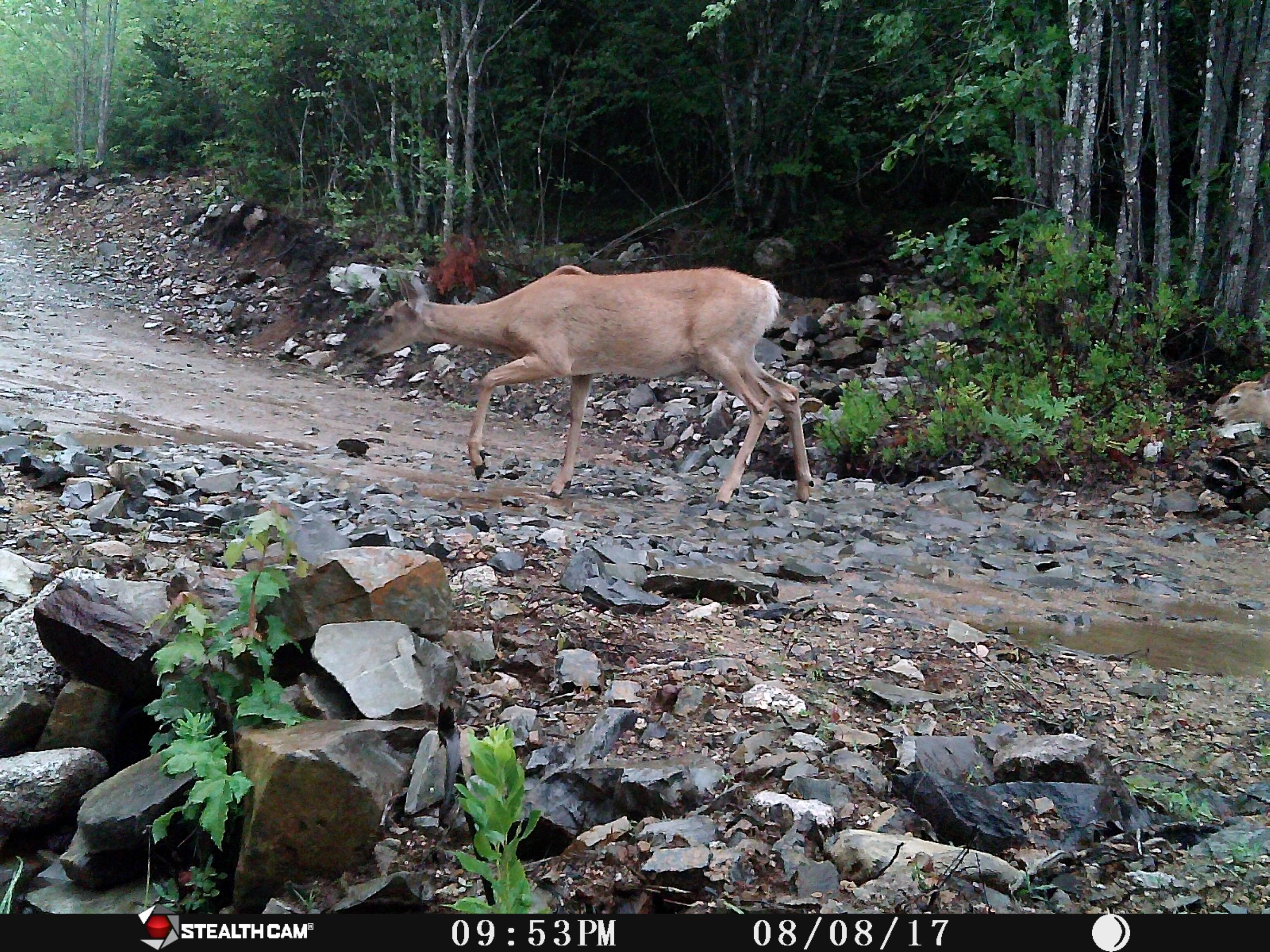 mama deer 3