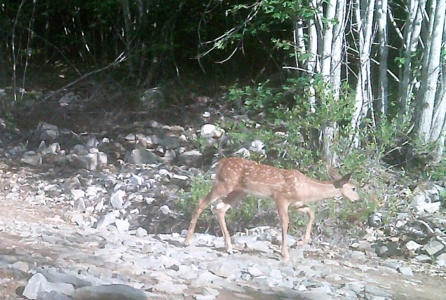 mama deers baby