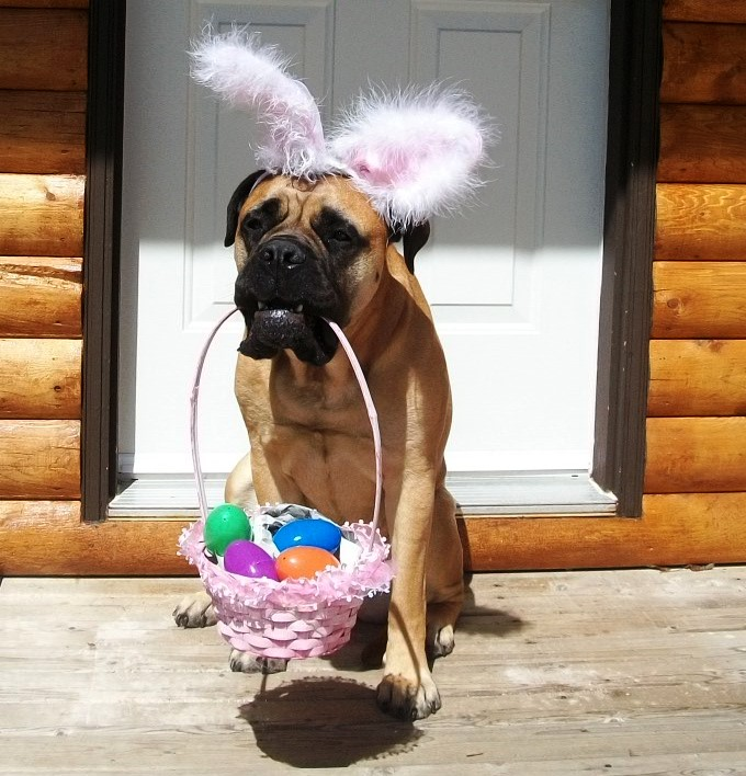 Frohe Ostern - Copy