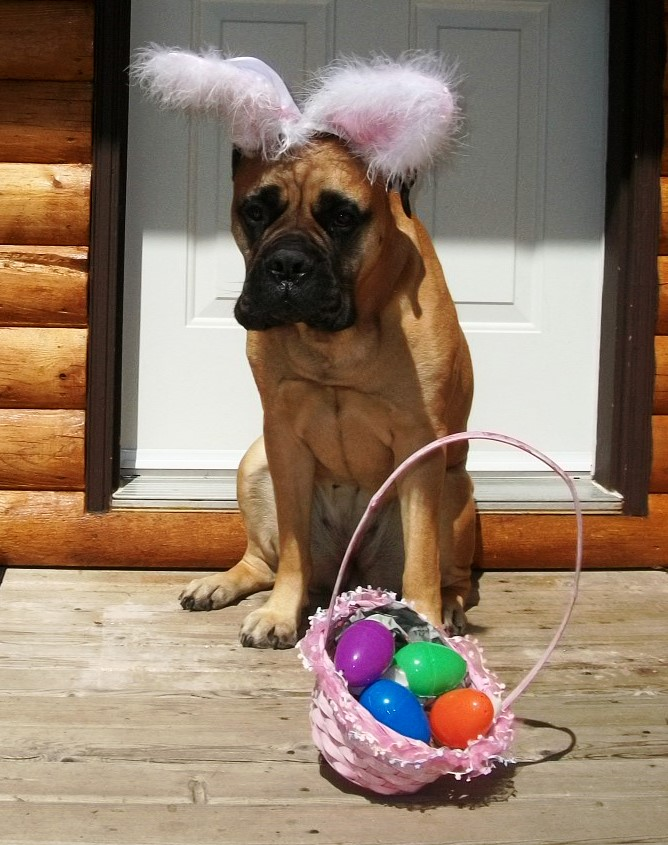 Frohes Ostern '14 - Copy