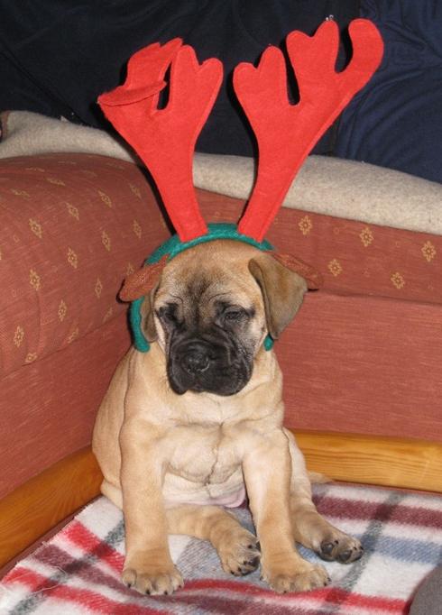 Emmy Weihnachten 2009